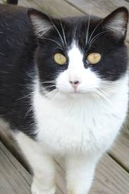 Lost pets  Liverpool -  TIMID black & white