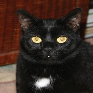 Lost pets  London - Black adult female was lost in EAST London