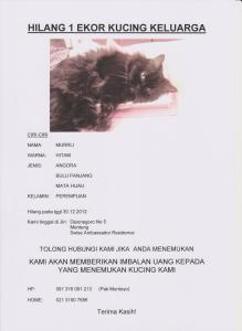 Lost pets  Djakarta - Family member for 10 years - Cat disapeared