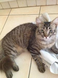 Lost pets  Dubai - Lost my cat at Dubai Festival City - United Arab Emirates - plz help me to find