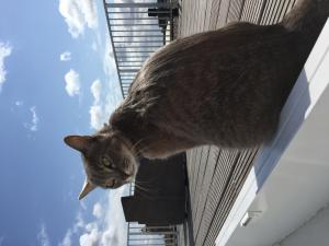 Lost pets  Amsterdam - I HAVE LOST MY BELOVED CAT